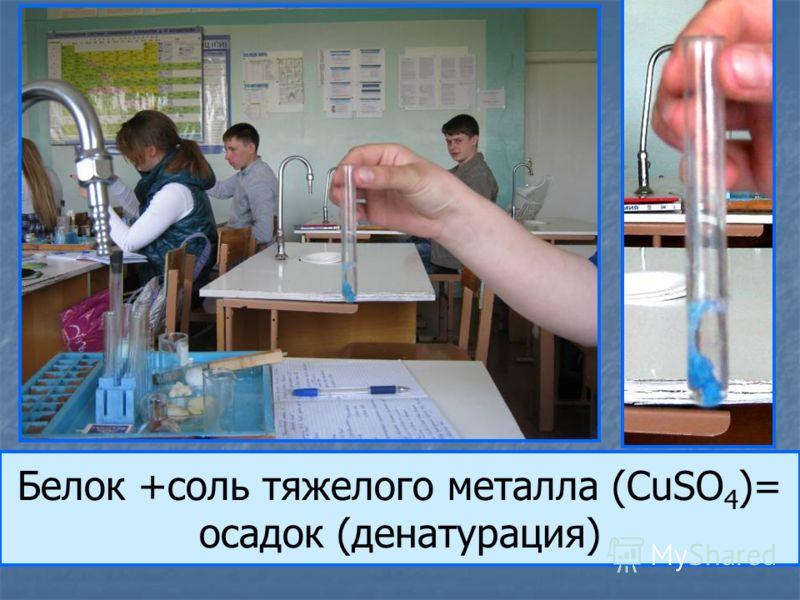 Белок +соль тяжелого металла (CuSO 4 )= осадок (денатурация)