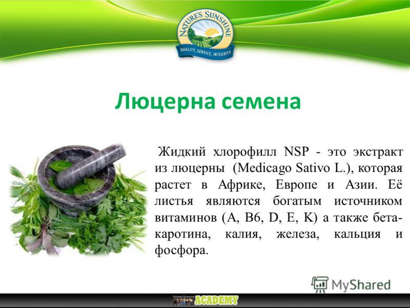 Люцерна семена Жидкий хлорофилл NSP - это экстракт из люцерны (Medicago Sativo L.), которая растет в Африке, Европе и Азии. Её листья являются богатым источником витаминов (А, В6, D, E, K) а также бета- каротина, калия, железа, кальция и фосфора.