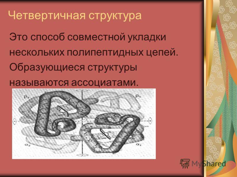 Четвертичная структура Это способ совместной укладки нескольких полипептидных цепей. Образующиеся структуры называются ассоциатами.