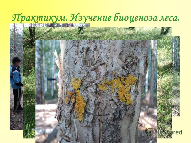 Практикум. Изучение биоценоза леса.