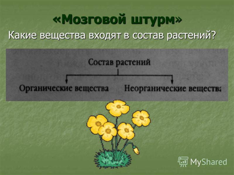 «Мозговой штурм» Какие вещества входят в состав растений?