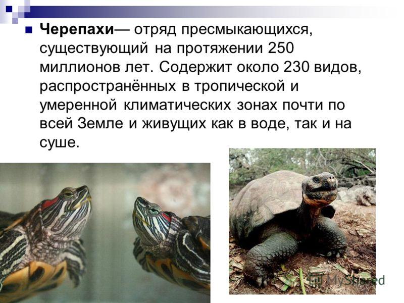 Черепахи отряд пресмыкающихся, существующий на протяжении 250 миллионов лет. Содержит около 230 видов, распространённых в тропической и умеренной климатических зонах почти по всей Земле и живущих как в воде, так и на суше.