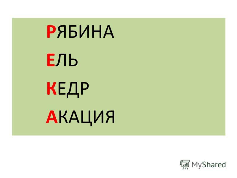 РЯБИНА ЕЛЬ КЕДР АКАЦИЯ