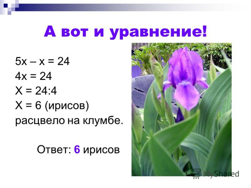 А вот и уравнение! 5х – х = 24 4х = 24 Х = 24:4 Х = 6 (ирисов) расцвело на клумбе. Ответ: 6 ирисов