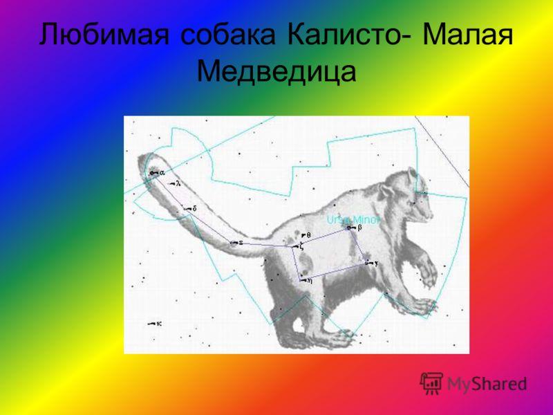 Любимая собака Калисто- Малая Медведица
