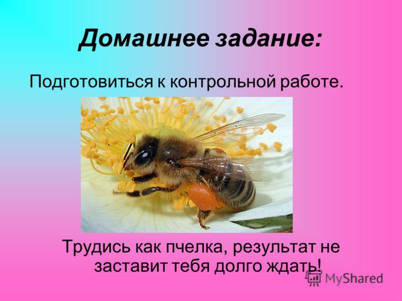 Домашнее задание: Подготовиться к контрольной работе. Трудись как пчелка, результат не заставит тебя долго ждать!