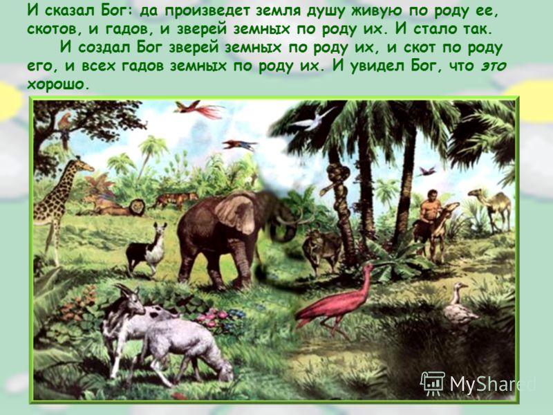 И сказал Бог: да произведет земля душу живую по роду ее, скотов, и гадов, и зверей земных по роду их. И стало так. И создал Бог зверей земных по роду их, и скот по роду его, и всех гадов земных по роду их. И увидел Бог, что это хорошо.