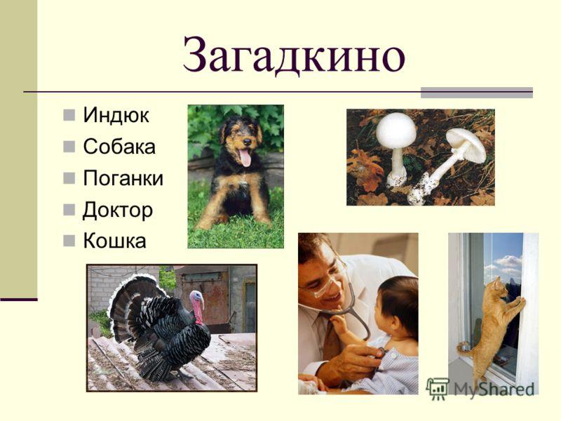 11 Загадкино Индюк Собака Поганки Доктор Кошка
