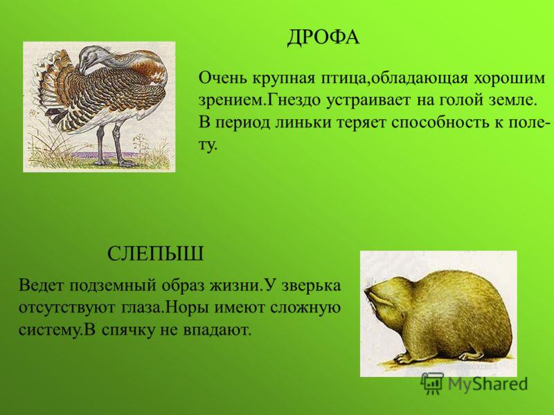 птицы донского края фото