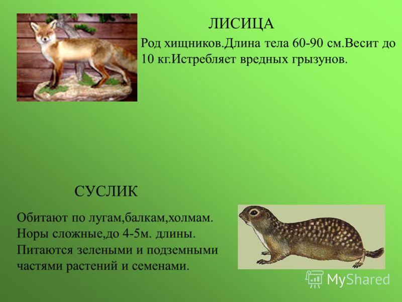 ЛИСИЦА Род хищников.Длина тела 60-90 см.Весит до 10 кг.Истребляет вредных грызунов. СУСЛИК Обитают по лугам,балкам,холмам. Норы сложные,до 4-5м. длины. Питаются зелеными и подземными частями растений и семенами.