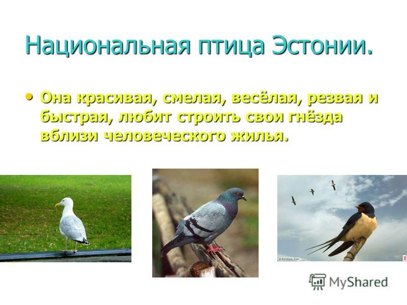 Национальная птица Эстонии. Она красивая, смелая, весёлая, резвая и быстрая, любит строить свои гнёзда вблизи человеческого жилья. Она красивая, смелая, весёлая, резвая и быстрая, любит строить свои гнёзда вблизи человеческого жилья. 1. 2. 3.