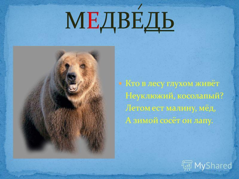 Кто в лесу глухом живёт Неуклюжий, косолапый? Летом ест малину, мёд, А зимой сосёт он лапу.