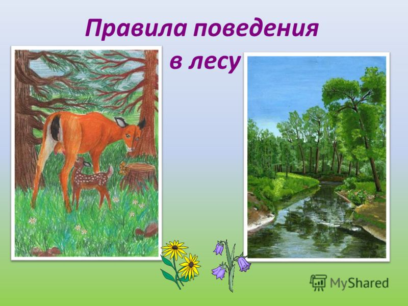 Правила поведения в лесу лес – наше