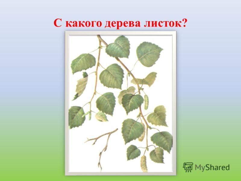 С какого дерева листок?