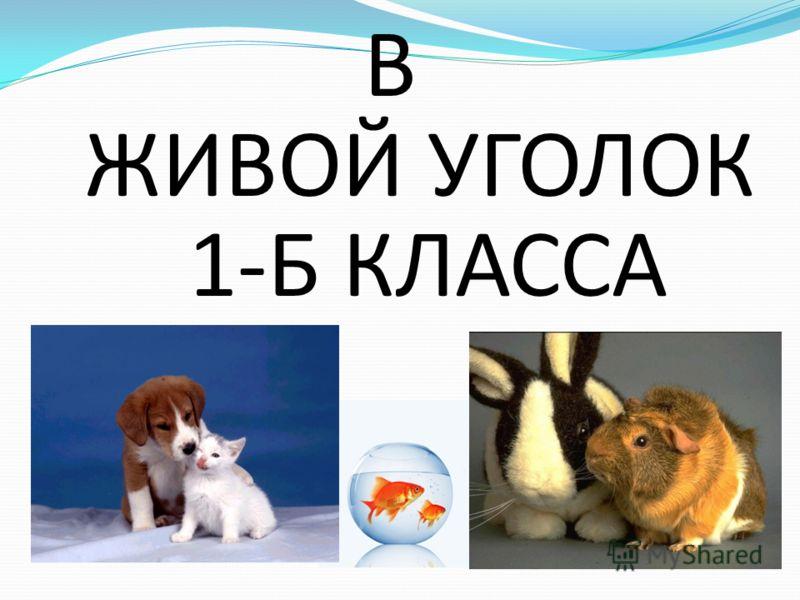 ЖИВОЙ УГОЛОК В 1-Б КЛАССА