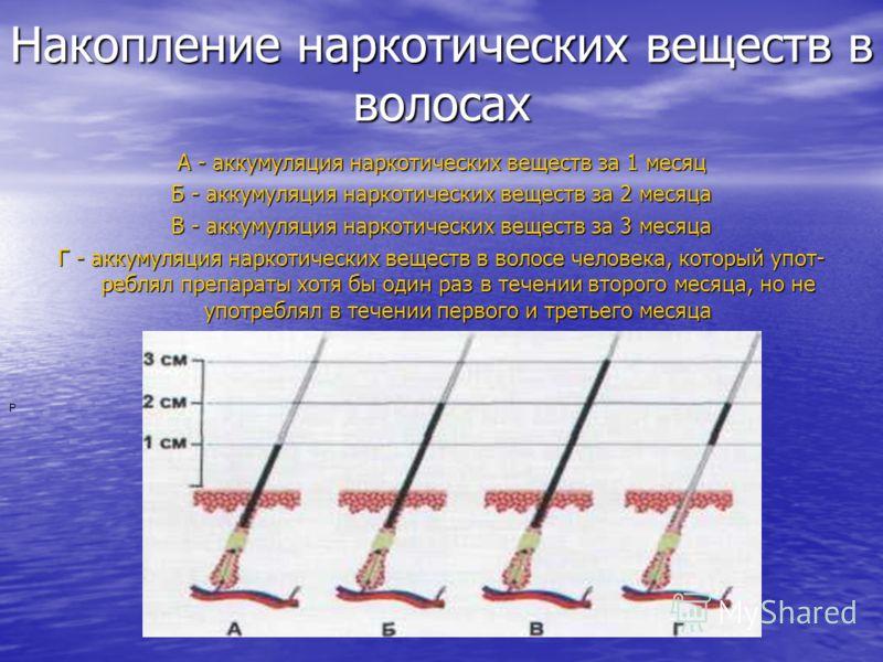 Накопление наркотических веществ в волосах А - аккумуляция наркотических веществ за 1 месяц Б - аккумуляция наркотических веществ за 2 месяца В - аккумуляция наркотических веществ за 3 месяца Г - аккумуляция наркотических веществ в волосе человек