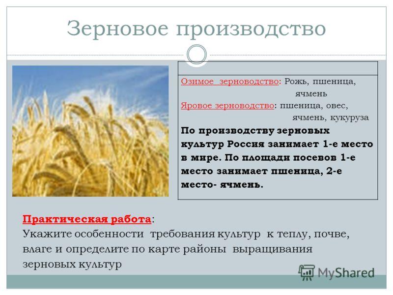 Зерновое производство Озимое зерноводство: Рожь, пшеница, ячмень Яровое зерноводство: пшеница, овес, ячмень, кукуруза По производству зерновых культур Россия занимает 1-е место в мире. По площади посевов 1-е место занимает пшеница, 2-е место- ячмень.