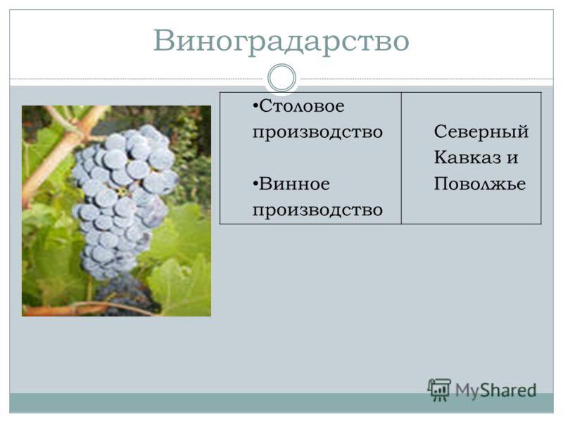 Виноградарство Столовое производство Винное производство Северный Кавказ и Поволжье