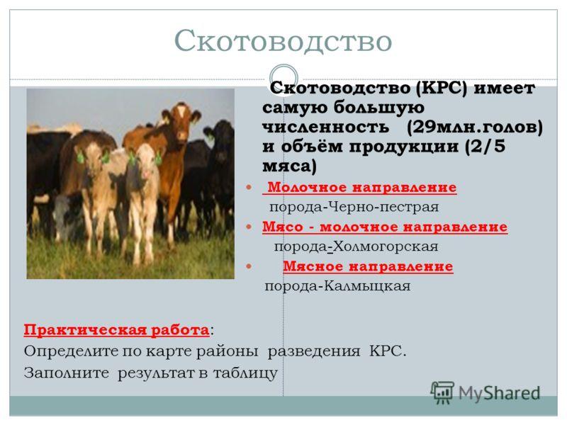 Скотоводство Скотоводство (КРС) имеет самую большую численность (29млн.голов) и объём продукции (2/5 мяса) Молочное направление порода-Черно-пестрая Мясо - молочное направление порода-Холмогорская Мясное направление порода-Калмыцкая Практическая рабо