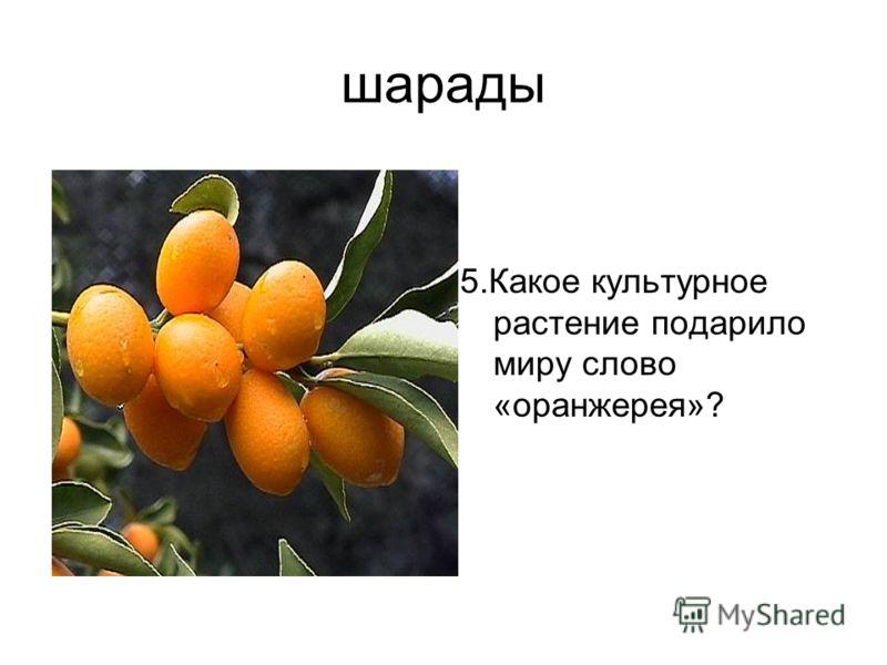 шарады 5.Какое культурное растение подарило миру слово «оранжерея»?
