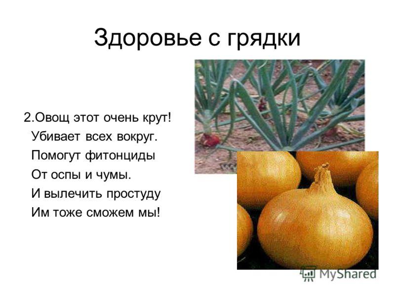 Здоровье с грядки 2.Овощ этот очень крут! Убивает всех вокруг. Помогут фитонциды От оспы и чумы. И вылечить простуду Им тоже сможем мы!