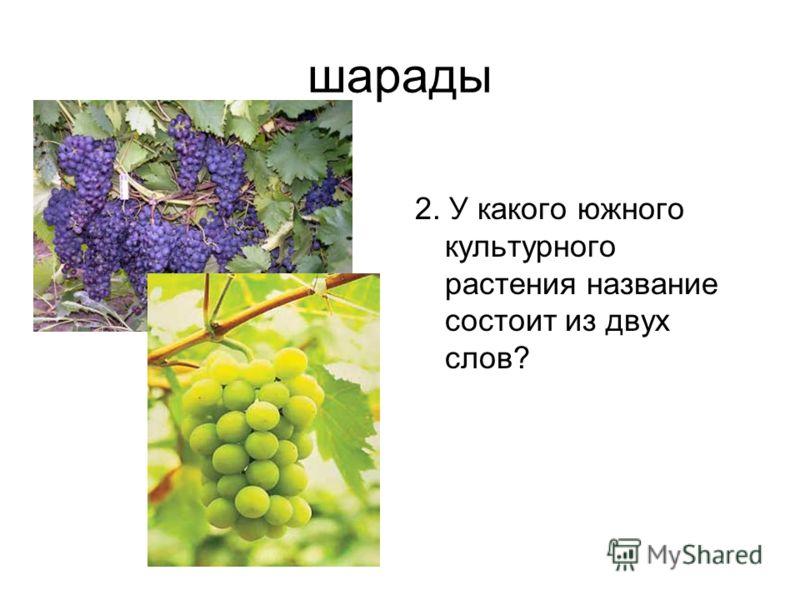 шарады 2. У какого южного культурного растения название состоит из двух слов?