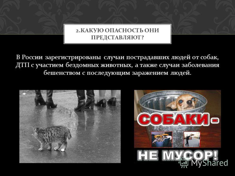 В России зарегистрированы случаи пострадавших людей от собак, ДТП с участием бездомных животных, а также случаи заболевания бешенством с последующим заражением людей. 2. КАКУЮ ОПАСНОСТЬ ОНИ ПРЕДСТАВЛЯЮТ ?