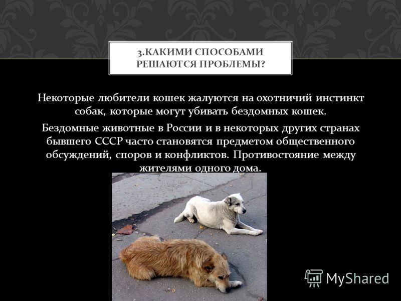 Некоторые любители кошек жалуются на охотничий инстинкт собак, которые могут убивать бездомных кошек. Бездомные животные в России и в некоторых других странах бывшего СССР часто становятся предметом общественного обсуждений, споров и конфликтов. Прот