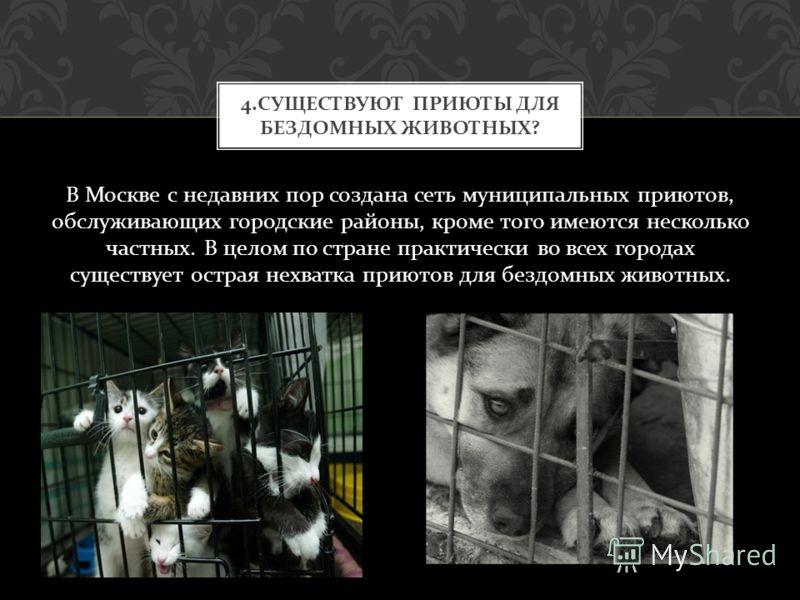 В Москве с недавних пор создана сеть муниципальных приютов, обслуживающих городские районы, кроме того имеются несколько частных. В целом по стране практически во всех городах существует острая нехватка приютов для бездомных животных. 4. СУЩЕСТВУЮТ П