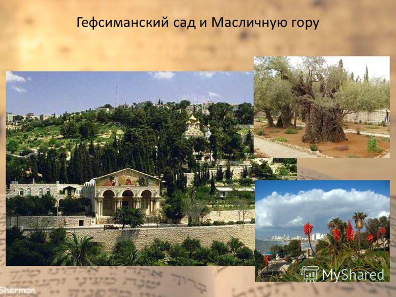 Гефсиманский сад и Масличную гору