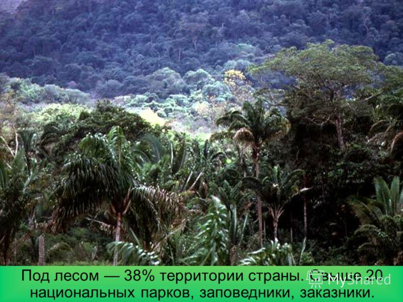 Природные зоны На Амазонской низменности влажные экваториальные леса, в центральной части саванны и редколесья, на Приатлантической низменности тропические переменно-влажные леса, на юге субтропические леса.