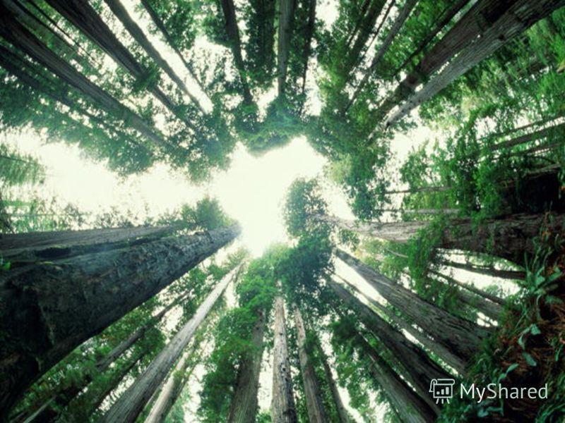 Единство в разнообразии Земля - это сад, а народы и культуры цветы в этом саду. Чем разнообразнее цветы, тем краше и прекраснее сад...