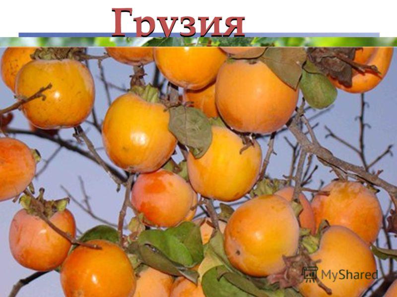 Грузия Грузия славится: виноградниками, плантациями чая, мандаринами, хурмой, гранатами!