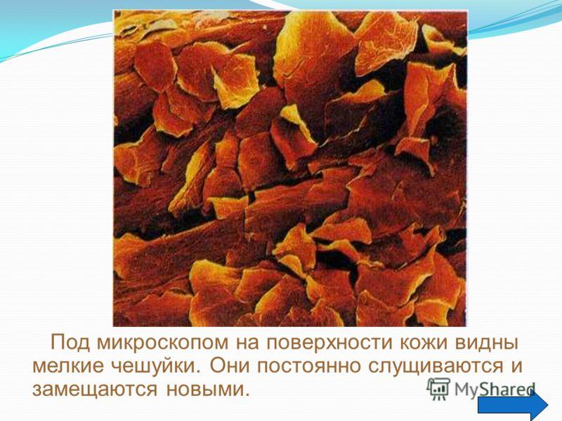 КЛЕТКА – основа строения и роста живых организмов. Живой организм, который дышит, питается, растет, размножается, умирает. Умершие клетки заменяются новыми. Клетки одинакового строения образуют ткань. Дыхание и питание обеспечивают рост и деление кле