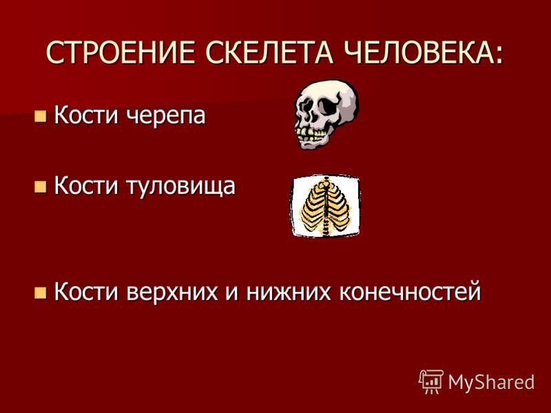 СТРОЕНИЕ СКЕЛЕТА ЧЕЛОВЕКА: Кости черепа Кости черепа Кости туловища Кости туловища Кости верхних и нижних конечностей Кости верхних и нижних конечностей