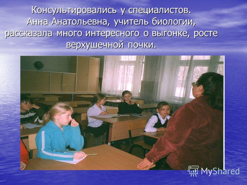 Консультировались у специалистов. Анна Анатольевна, учитель биологии, рассказала много интересного о выгонке, росте верхушечной почки.