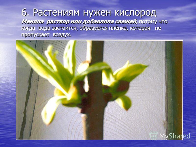 6. Растениям нужен кислород Меняла раствор или добавляла свежей, потому что когда вода застоится, образуется плёнка, которая не пропускает воздух.