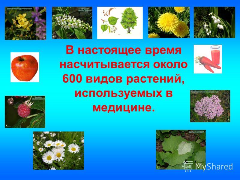 В настоящее время насчитывается около 600 видов растений, используемых в медицине.