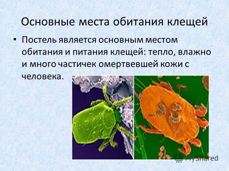Основные места обитания клещей Постель является основным местом обитания и питания клещей: тепло, влажно и много частичек омертвевшей кожи с человека.
