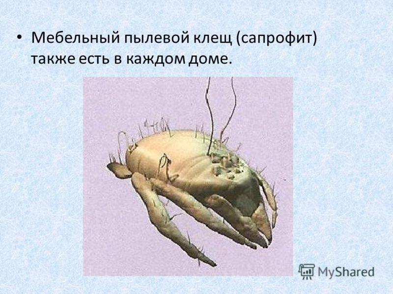 Сапрофит фото