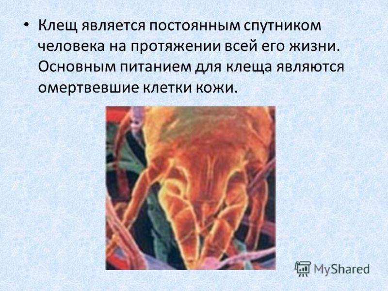Клещ является постоянным спутником человека на протяжении всей его жизни. Основным питанием для клеща являются омертвевшие клетки кожи.