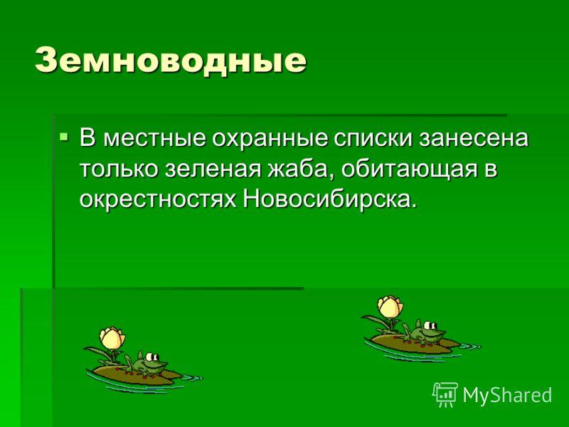 Земноводные В местные охранные списки занесена только зеленая жаба, обитающая в окрестностях Новосибирска. В местные охранные списки занесена только зеленая жаба, обитающая в окрестностях Новосибирска.