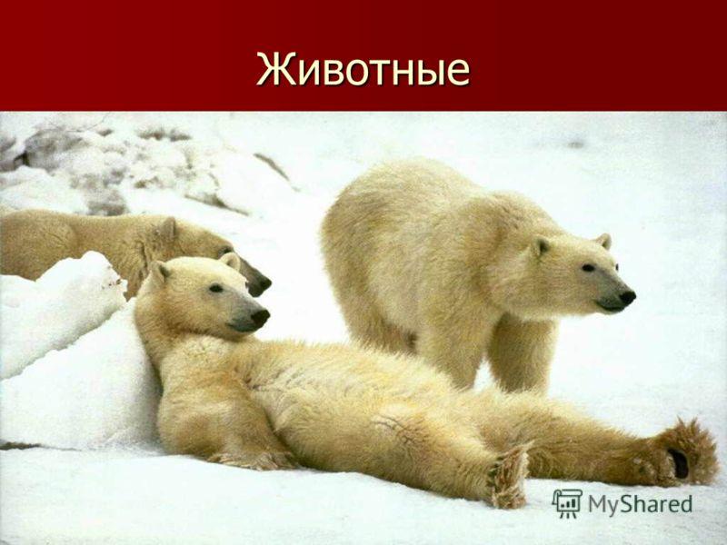 Животные слайд 6 слайд 7 слайд 8 слайд 9