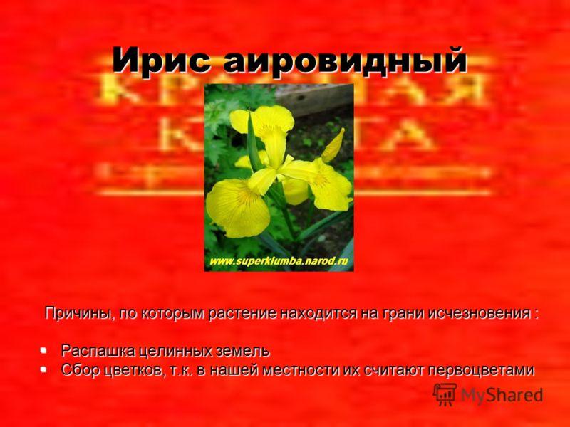 Ирис аировидный Причины, по которым растение находится на грани исчезновения : Распашка целинных земель Распашка целинных земель Сбор цветков, т.к. в нашей местности их считают первоцветами Сбор цветков, т.к. в нашей местности их считают первоцветами
