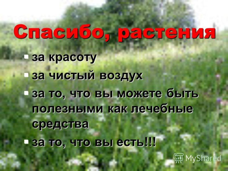 Спасибо, растения за красоту за красоту за чистый воздух за чистый воздух за то, что вы можете быть полезными как лечебные средства за то, что вы можете быть полезными как лечебные средства за то, что вы есть!!! за то, что вы есть!!!