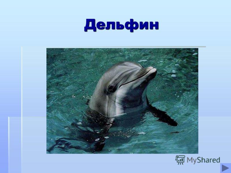 Дельфин Дельфин