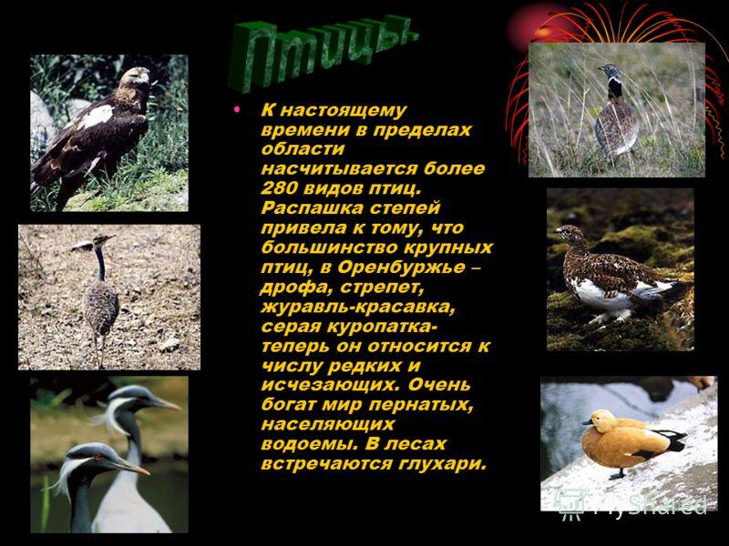 К настоящему времени в пределах области насчитывается более 280 видов птиц. Распашка степей привела к тому, что большинство крупных птиц, в Оренбуржье – дрофа, стрепет, журавль-красавка, серая куропатка- теперь он относится к числу редких и исчезающи