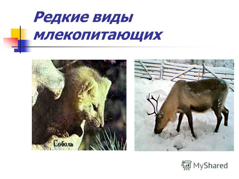 Редкие виды млекопитающих