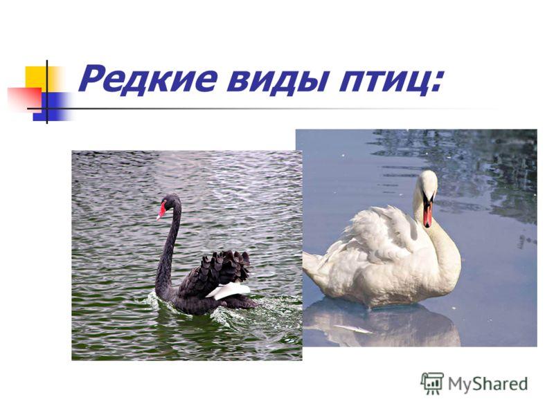 Редкие виды птиц: