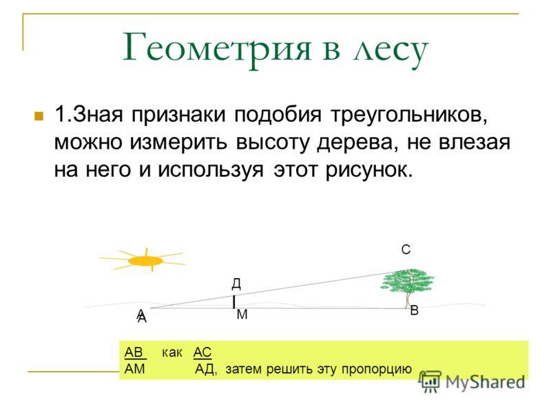 Геометрия в лесу 1.Зная признаки подобия треугольников, можно измерить высоту дерева, не влезая на него и используя этот рисунок. АВ как АС АМ АД, затем решить эту пропорцию А АМ В Д С